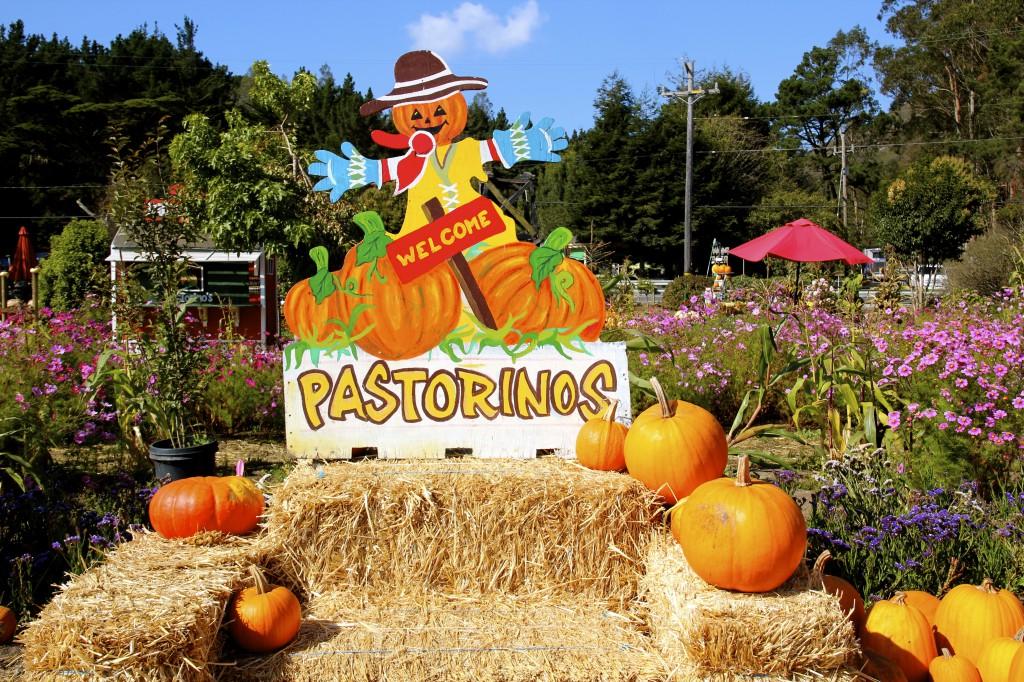 Pastorino's