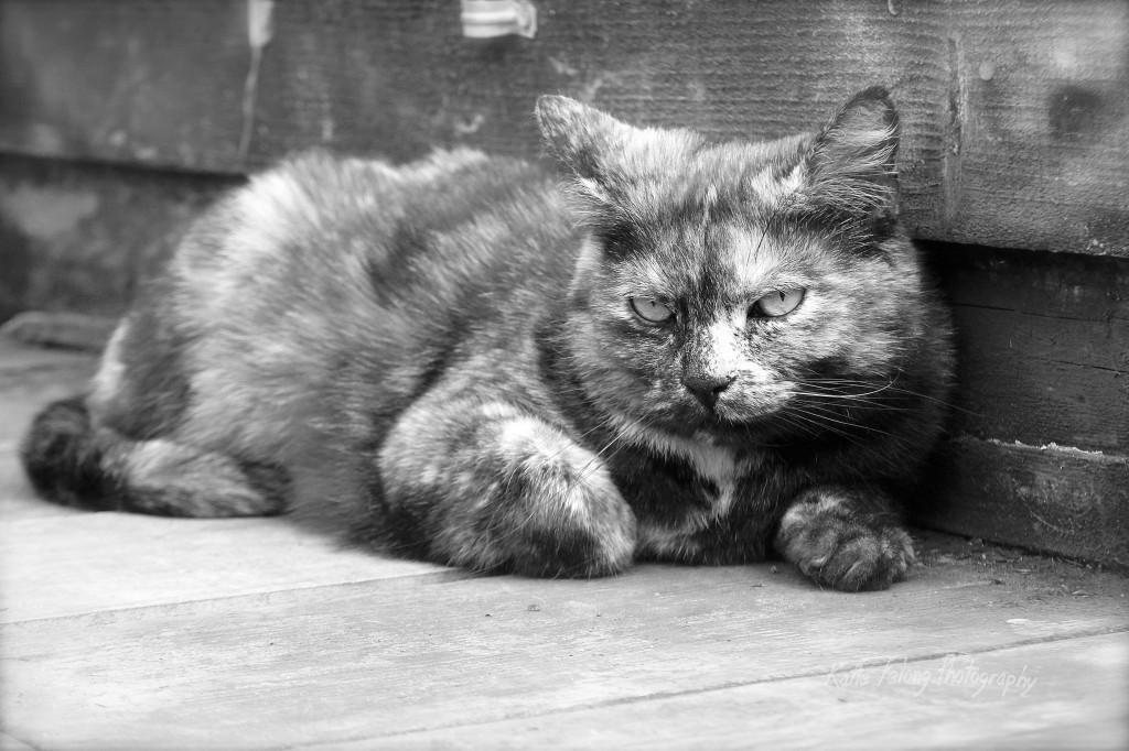 Kitty HMB